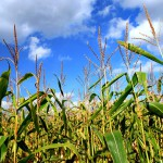 Классификация затрат на производство продукции растениеводства