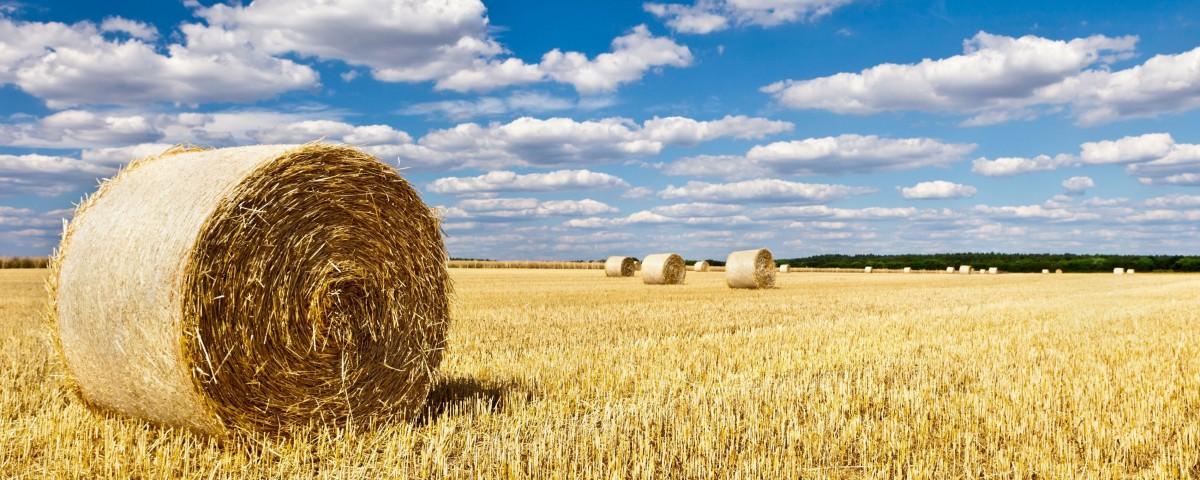 Растениеводство та Экономическая эффективность