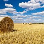 Повышение производственной эффективности предприятий растениеводства