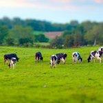 Проблемы животноводства и мировое развитие