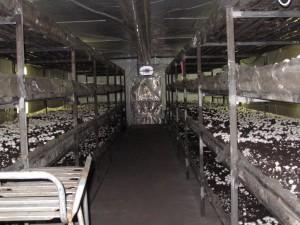 Профессионально оборудованное помещение для выращивания шампиньонов