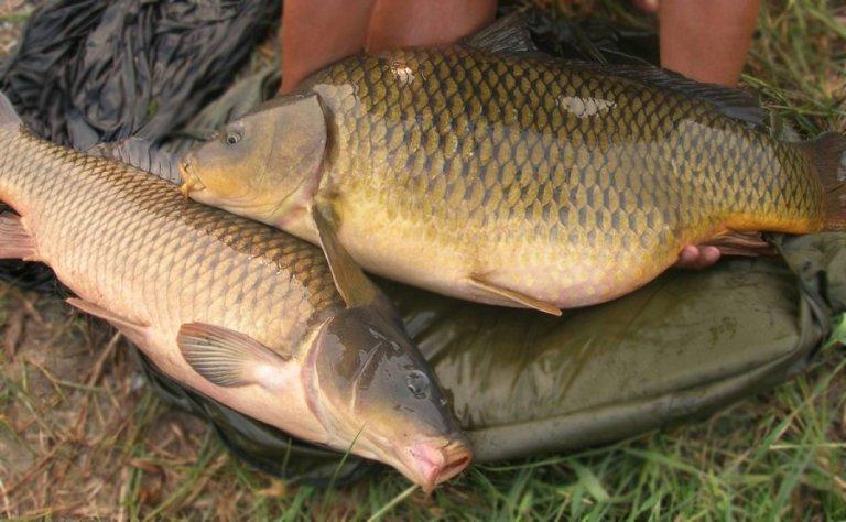 Рыбоводство как способ дополнительного заработка
