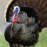 Современное птицеводство: особенности и тенденции