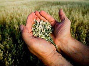 Растениеводство как часть российского сельского хозяйства