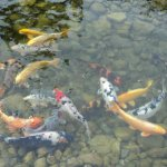 Искусственное разведение рыб в водоемах как бизнес