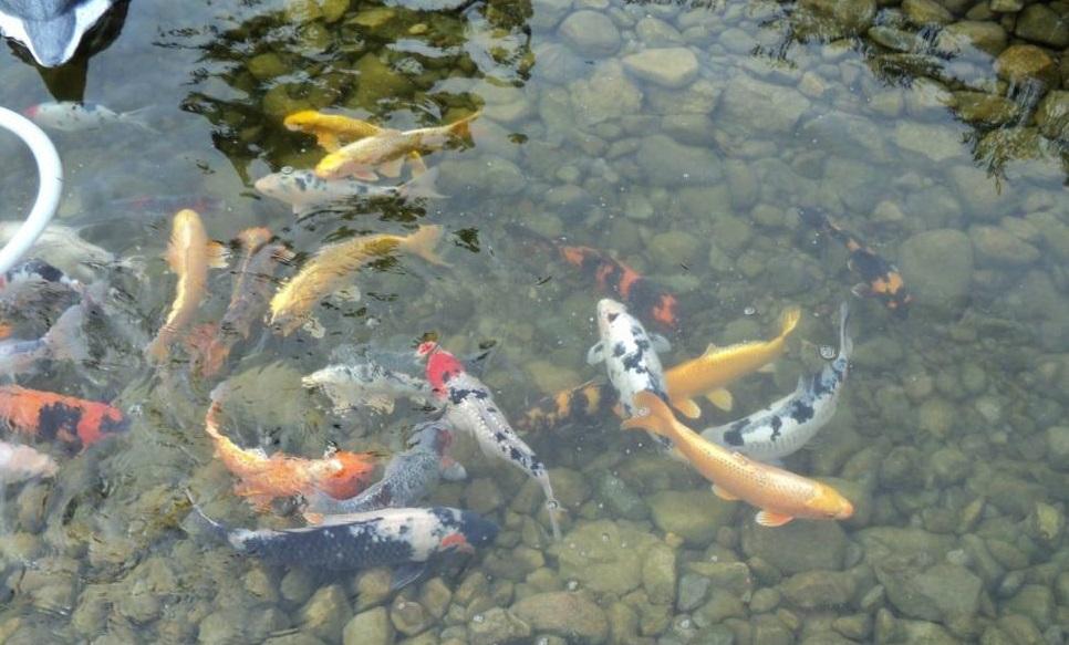 Выращивание рыбы в искусственных водоемах и узв