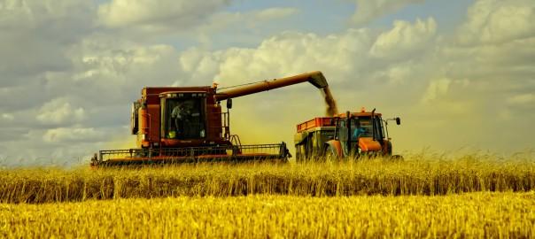 Значение растениеводства