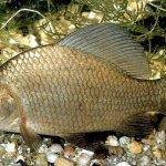 Домашнее рыбоводство: азы и особенности