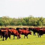 Системы животноводства: основные виды и элементы