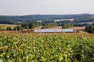Экономическая эффективность растениеводства