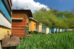 Ульи для искусственного размножения пчелиных семей