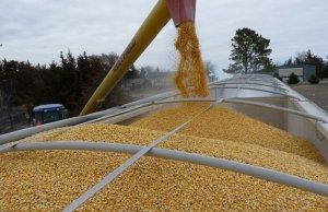 Зерновой гарантийный фонд