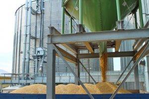 Завод с зерном пшеницы