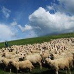 Современное животноводство: состояние и основная продукция отрасли