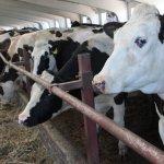 Производство продукции животноводства: анализ эффективности и себестоимости