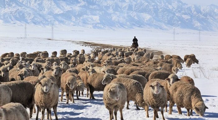Механизация животноводства: состояние и перспективы