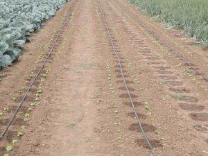 Система капельного полива на различных типах почв