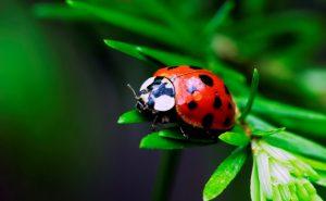 Полезные животные в саду и на огороде