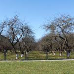 Болезни садовых деревьев