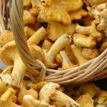 Все о выращивании грибов в домашних условиях