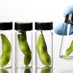 Республика Белоруссия выдвинула предложение о согласовании в Союзном государстве вопрос по ГМО продукции, относящиеся к аграрному сектору