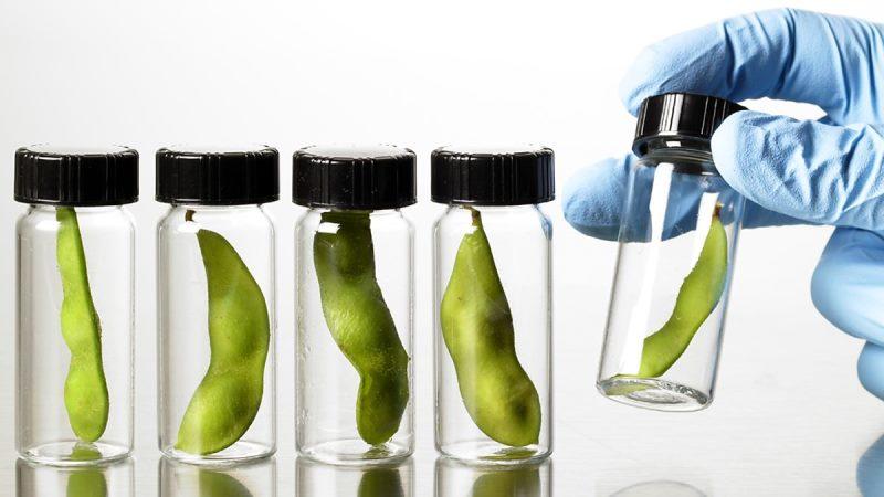 ГМО продукция