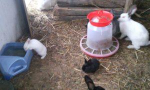 Кролики в вольерах со стожками