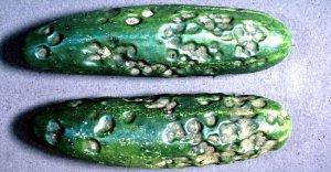 Антракноз плодов огурцов