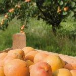 Болезни сада: основные виды и способы борьбы