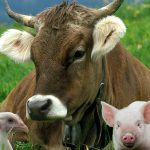 Домашнее животноводство