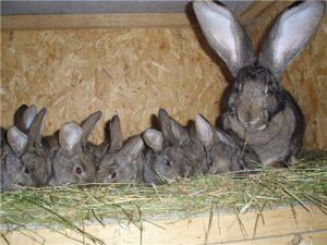 Крольчиха с детенышами