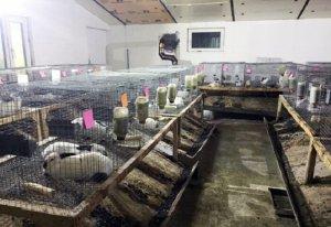 Разведение кроликов как бизнес: особенности и перспективы - Cельхозпортал