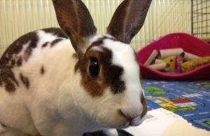 Разведение кроликов: особенности и основные правила
