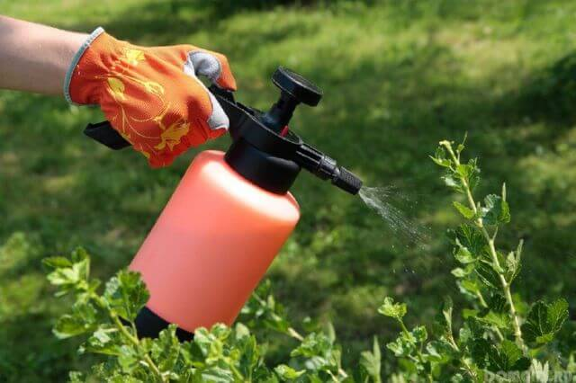 Применение пестицидов для борьбы с вредителями