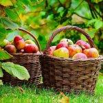Настои и отвары – Препараты для борьбы с вредителями и болезнями растений