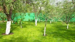 Совместимость деревьев на садовом участке