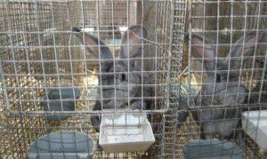 Кролики в клетке с поилкой и кормушкой