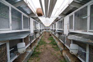 Шедовая система содержания кроликов