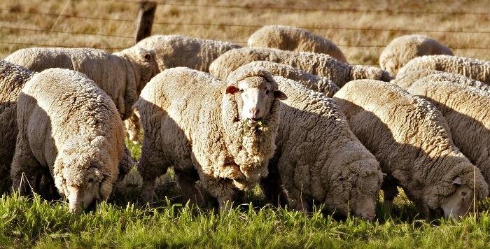 Виды животноводства: перспективы и проблемы развития