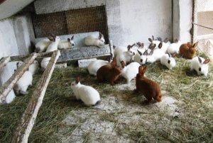Вольерное содержание и разведение кроликов