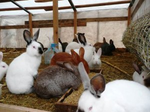Выращивание кроликов в личных подсобных хозяйствах