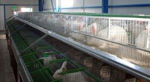 Промышленное выращивание кроликов