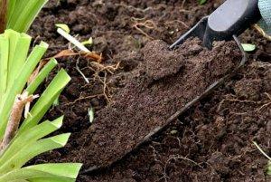 Готовим почву для тюльпанов