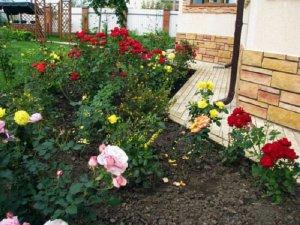 Место для посадки роз