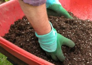 Почва для пионов