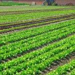 Удобрение растений: особенности использования различных видов