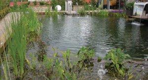 Растения садового водоема