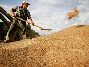 Сбор зерна