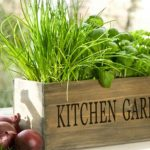 Уход за растениями на оконном огороде