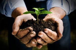 Промышленное выращивание растений